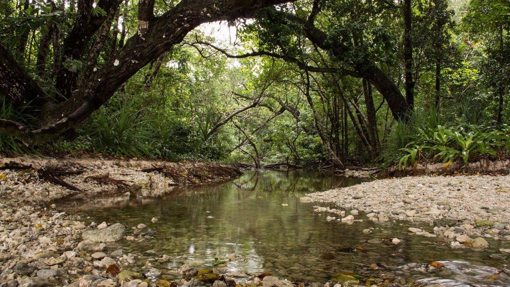 Hutan Tropis menuju Karang Copong