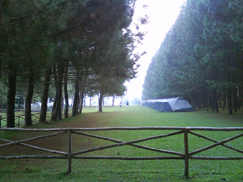 Pine Forest Lembang