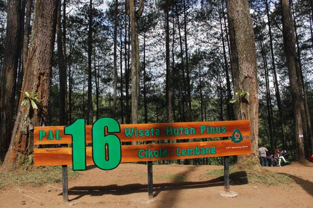 Wisata Hutan Pinus PAL 16