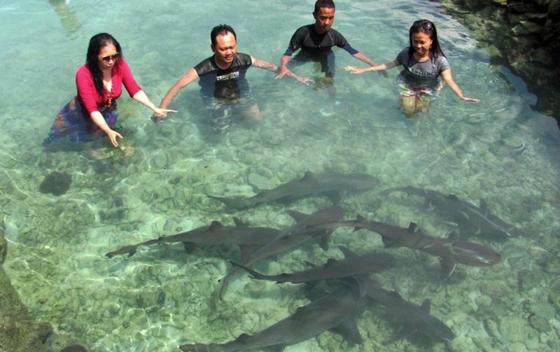 Berenang-Bersama-Hiu-di-Karimunjawa