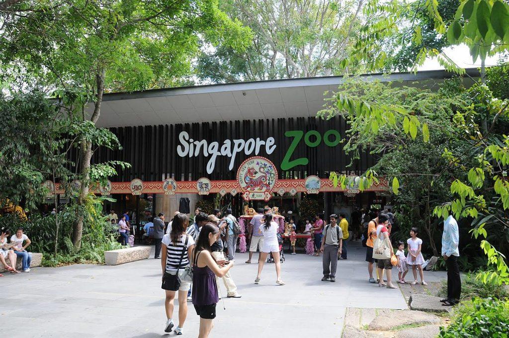 Singapore Zoo Singapura
