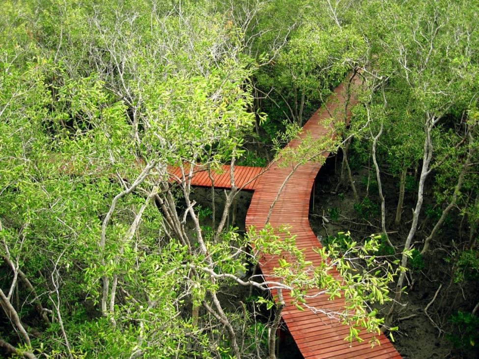 hutan mangrove di pulau karimun jawa