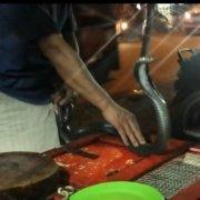 Sate Ular Kobra Mangga Besar