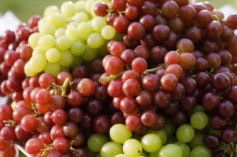 uzbekistan anggur