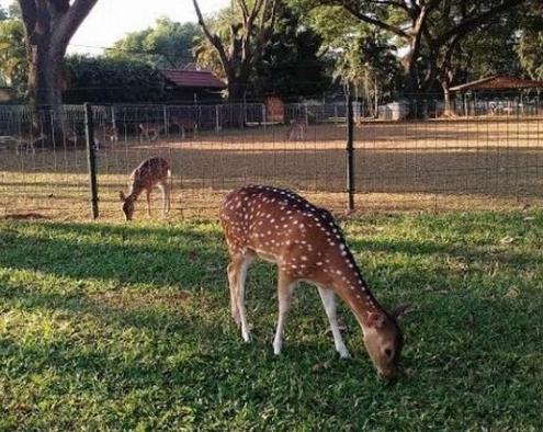 Taman RLiburan ke 8 Destinasi Wisata Alam Planet Bekasi Yang Jauh Dan Indahusa Kemang Pratama Bekasi